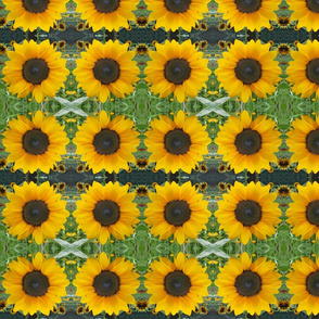 Sunflowers 9566