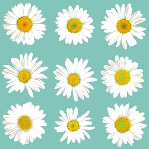 daisy dots on light teal