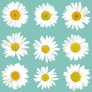 daisy dots on light teal