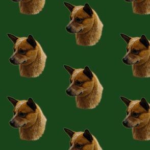Cattle_Dog_Profile_crop1