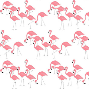 flamingo family group