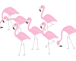 Rrflamingo_family_group_thumb
