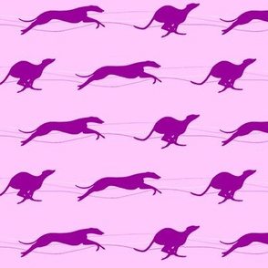 Running Whippets, Pink