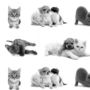 kittens in black and white