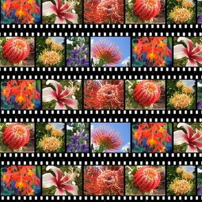 Hawaiian flower filmstrip