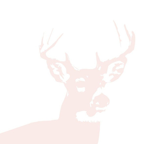 Pale Pink Buck // Pillow Covers