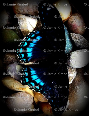 Rbutterfly_picture_edited_preview