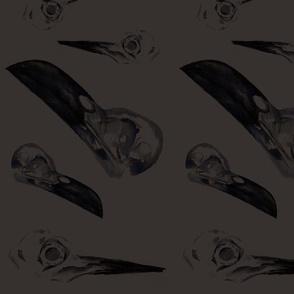 Brown Bird Skulls