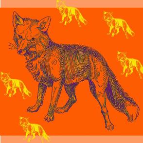Foxy_Orange