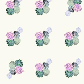 cream succulent