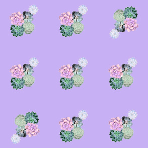 lilac succulents