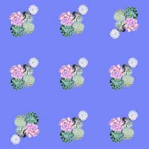 perwinkle succulents