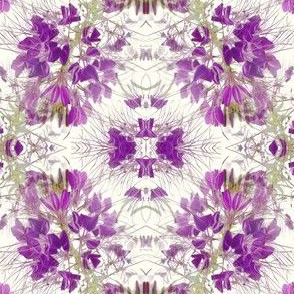 Purple Spider flower (cleome) on Offwhite