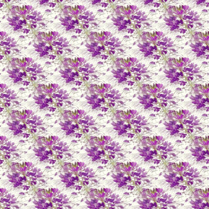 Spider Flower (cleome) on Offwhite