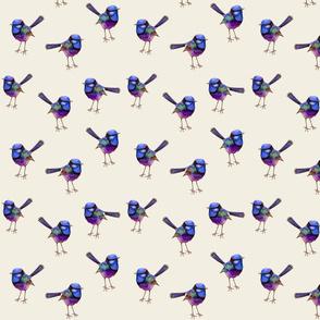 Royal Purple Blue Wren Bird