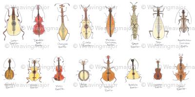 stringed beetles