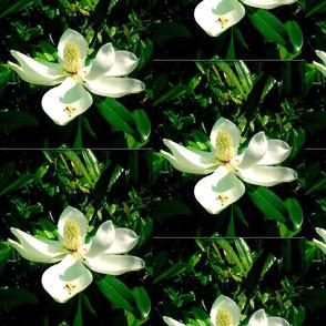 magnolia overload
