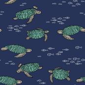 sea turtles // florida caribbean ocean water reptile kids baby