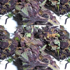 Purple Nugs