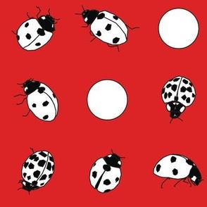 Scarlet Ladybug