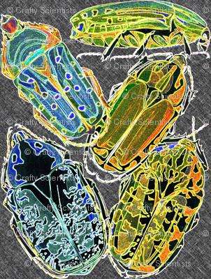 glow beetles