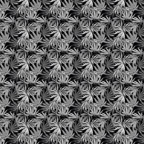 Mix Leaf Indica B/W