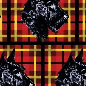 Black Scottish Terrier on plaid