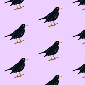 blackbird purple