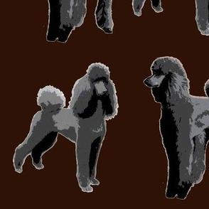 black poodles dark backgroung