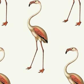 I'm a Flamingo Baby