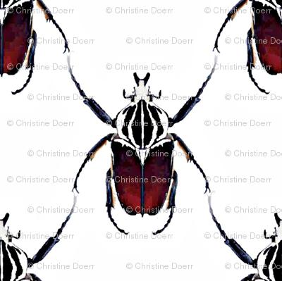 Beetle Lattice