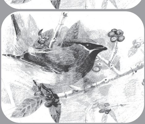 Rrrrrrrrmy_drawing_of_a_cedar_waxwing-_slightly_enhanced_because_the_scan_faded_the_true_colors_2__ed_ed_ed_ed_shop_preview