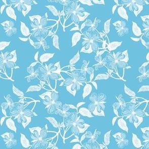 Snowy Dogwood Blossoms