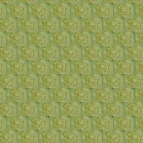 Cucumber insides