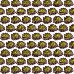 Lettuce Lace