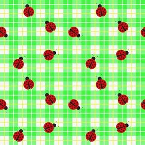 Ladybug_smaller_plaid