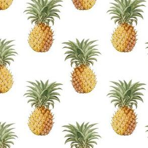 Pineapple Pattern Multi