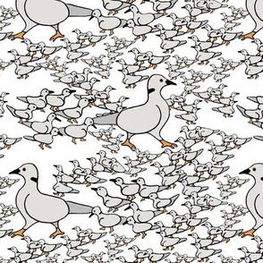Little Dove leads his flock