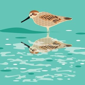 Sandpiper Reflections
