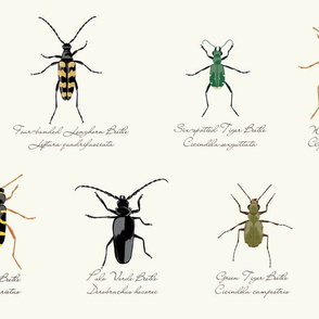 Beetle Specimen Collection