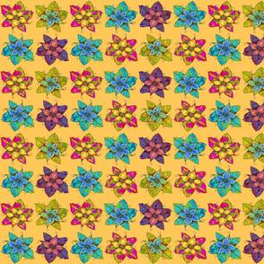 PINWHEELS FLOWERS APRICOT