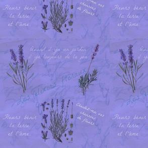 Lavender Periwinkle