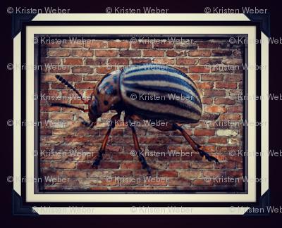 Brick Beetle