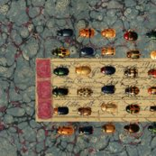 Rblue-marble-beetles18x150_shop_thumb