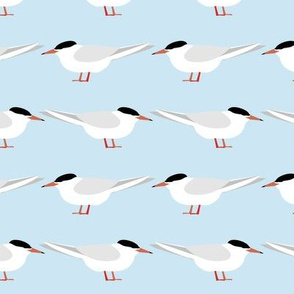 Terns of the tide