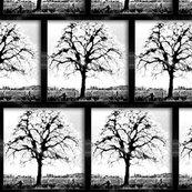 Rgarry_oak-b_and_wblack_frame_____shop_thumb