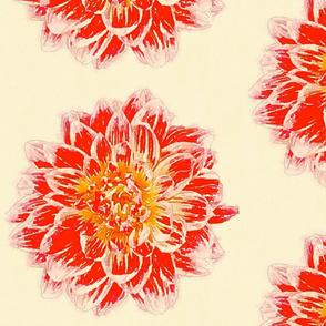 Dahlias - Oranges