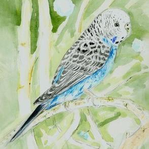 Blue Parakeet 2