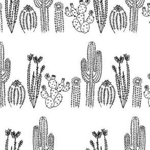 Tucson Cacti