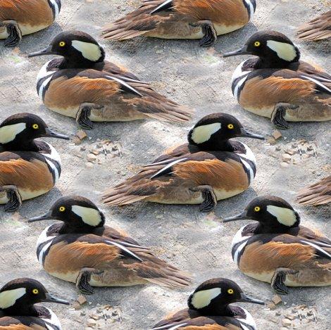 Rrhooded_merganser_duck_1793_shop_preview